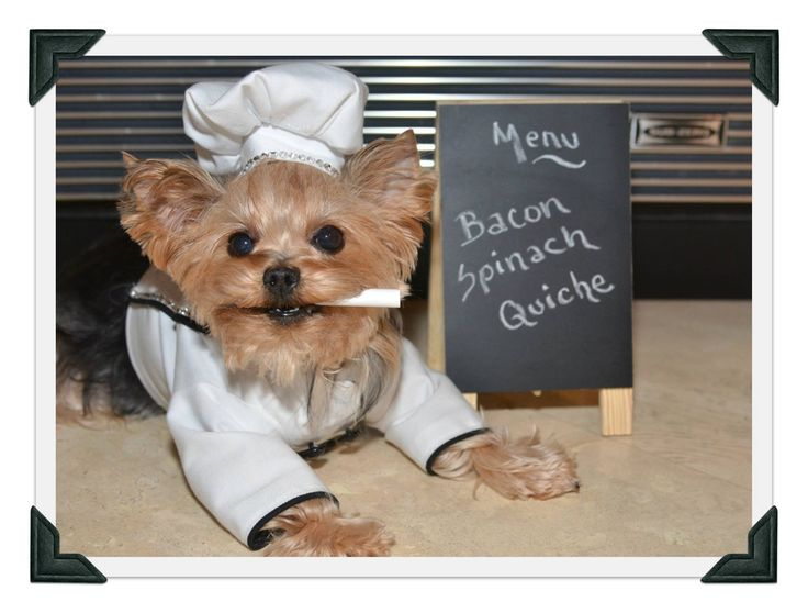 Check out my cookbook at: www.millielarue.net It is for humans AND doggies! And part of every sale is donated to doggie rescue organizations...it's a WIN-WIN!