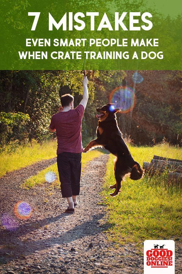 Caring For Your Dog Entails Work You Have To Be Sure That You Ve