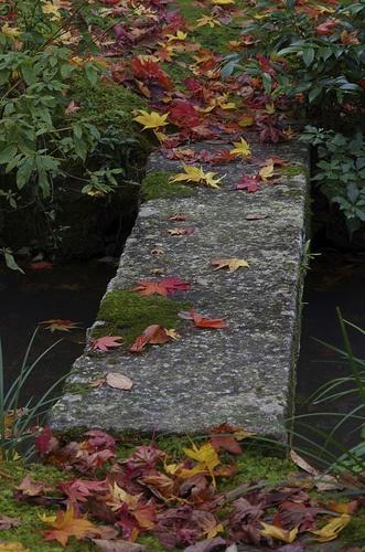 Jojakko-ji temple #japan #kyoto