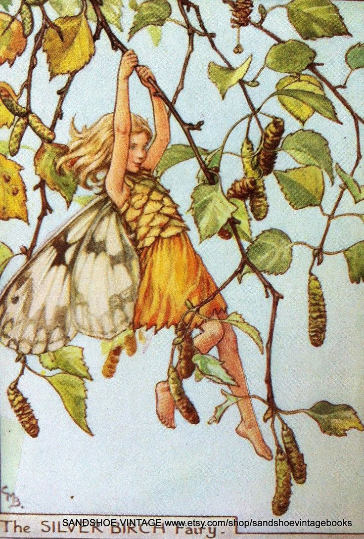 The SILVER BIRCH Fairy ~ Cicely Mary Barker ~