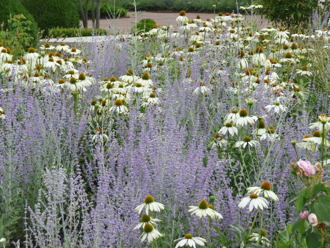 Planting by Swedish garden designer Ulf Nordfjell