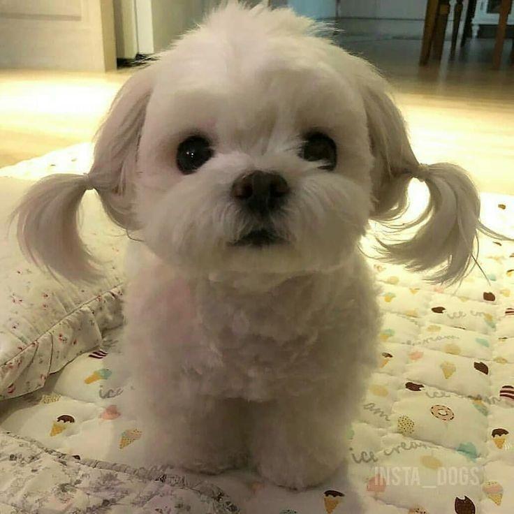 Muy dulce #feliz # dulce #minidog