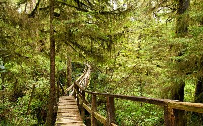 Transition of a Tofino Rainforest