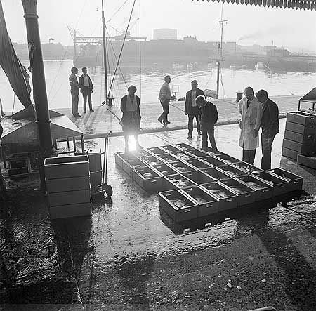 AA087685 People viewing fresh fish in crates at the Fish Market near the quay on the west of Sutton Harbour, Plymouth