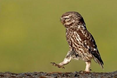 Owl: Owl Stuff, Precious Pets, Owl Reference