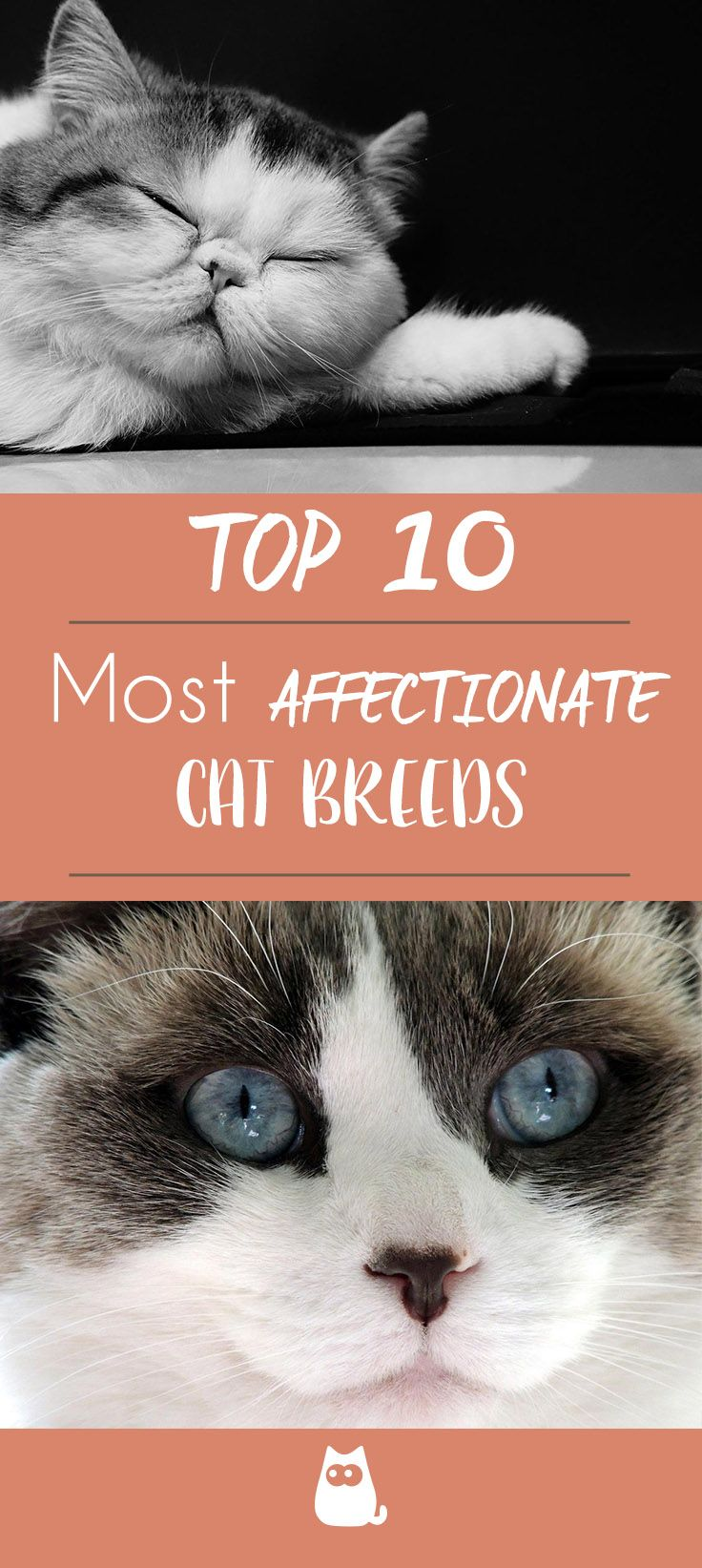 The 10 Most Affectionate Cat Breeds En 2020
