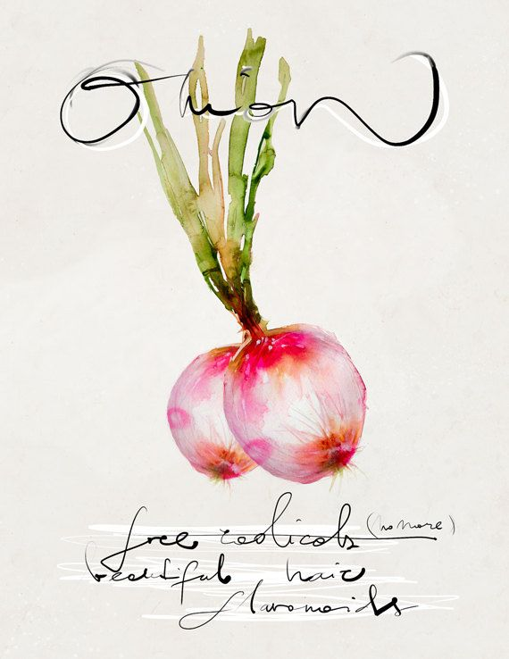 Illustration Food Watercolor art giclée print signed by the artist Food Series Onion :  $26.00