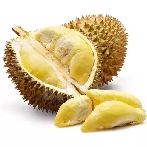 What is the difference between durian and jackfruit? - Quora This is a Durian