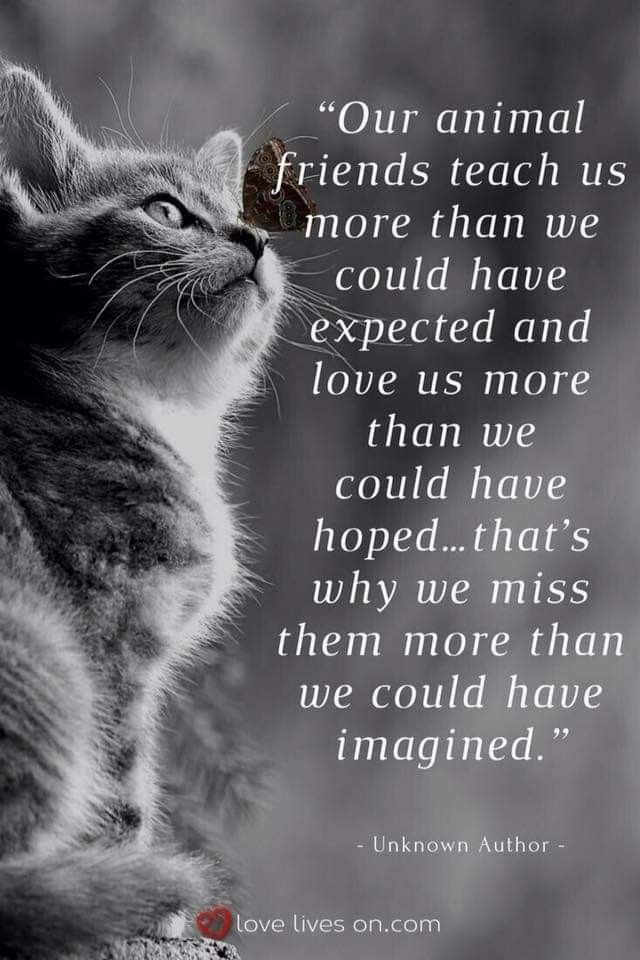 Pet Grief Animals Friends Animal Quotes