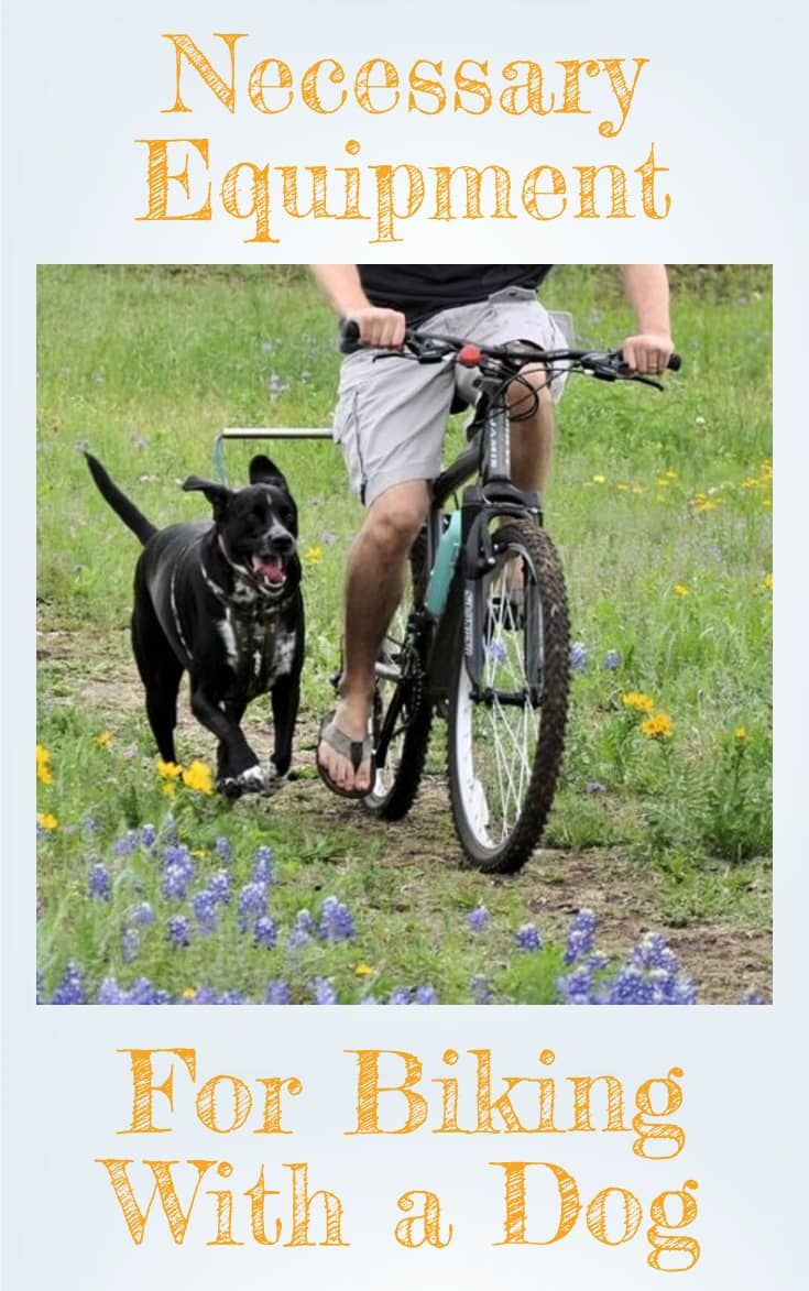 Bike Riding With Your Dog How To Bike With A Dog Dog Bike Leash