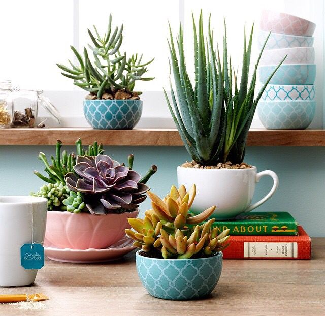 Succulents in different pots and mugs