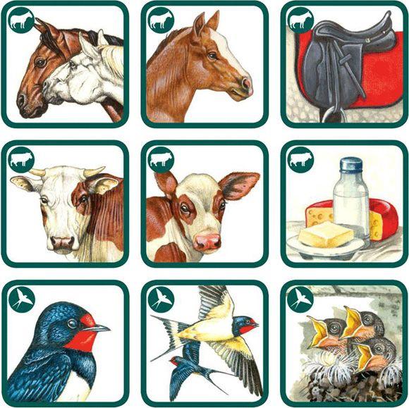 betexa, pexetrio, naučné karty, kreativní hra, zvířata, zvířátka