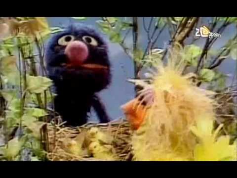 Sesamstraat - Grover - Eieren - YouTube