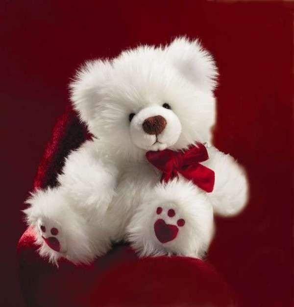 Valentine S Day Teddy Bear Teddy Bear Wallpaper Teddy Bear Pictures Teddy Bear Images