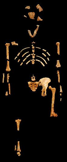 "Lucy (Australopithecus afarensis) - was named after listening to ""Lucy In The Sky With Diamonds"" by the Beatles when she was discovered by Donald Johanson and Tom Gray."