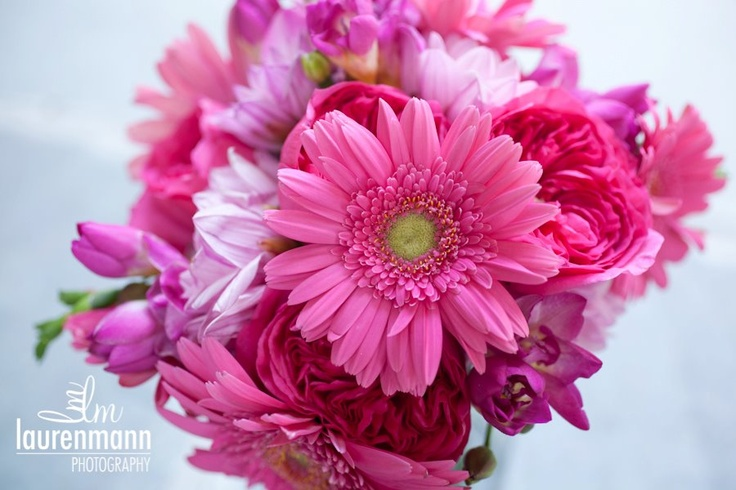 Pink gerber daisies, freesia and garden roses in a hot pink bouquet