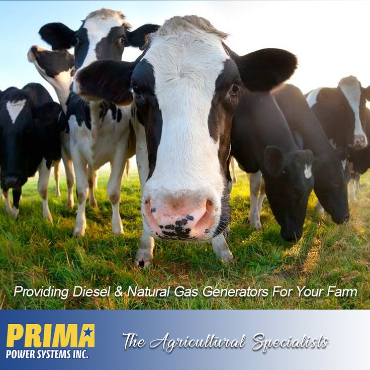 For a Generator your Farm can depend on. PRIMA specializes in Agricultural #Generators for #Diary, #Poultry, #Greenhouses & #Vineyards throughout #BC.  Contact us 1-(604) 791-1815