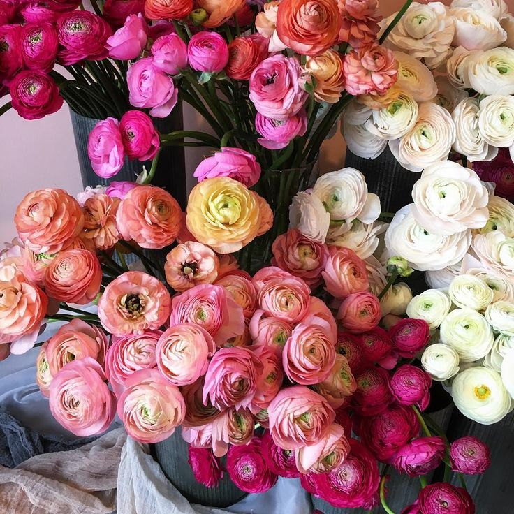 Picking up flowers for today's Trunk Show and loving these ranunculus! What's your favorite flower? #sdtrunkshow inspo by @wildnorthflowers