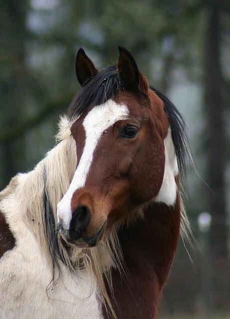 1621 besten horses bilder auf pinterest sch ne pferde haustiere und fohlen. Black Bedroom Furniture Sets. Home Design Ideas