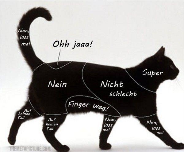 Streichelzonen einer Katze. Ein Fünkchen Wahrheit ist dran – Bild: themetapicture.com/Deutsch: einfachtierisch.de