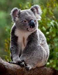 marsupiales pequeños -