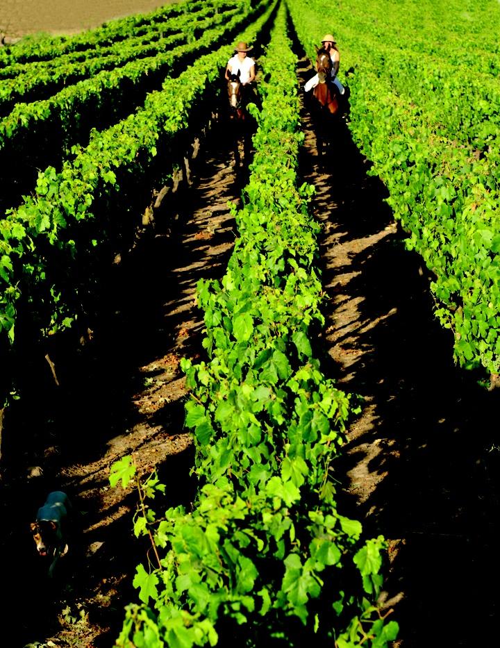 El Valle del Elqui, en el norte de Chile. http://www.thisischile.cl/
