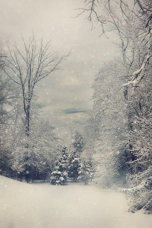 First Snow ~ By Kim Zier via designlovely.tumblr.com