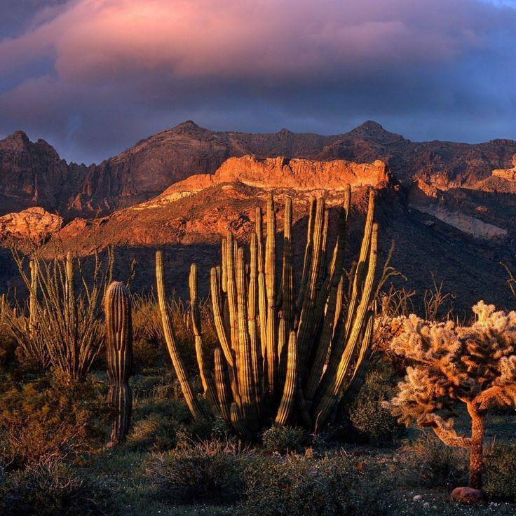 Desert cactus | Desert Cactus HD iPad Wallpaper #50173