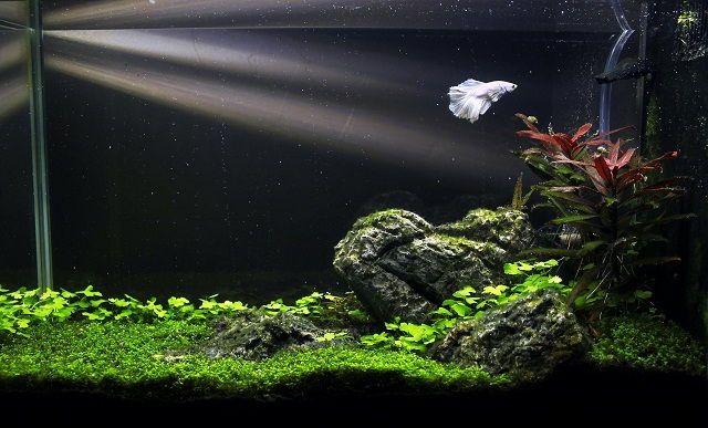 Image Result For Minimalist Fish Tanks Betta Aquarium Fish Tank Nature Aquarium