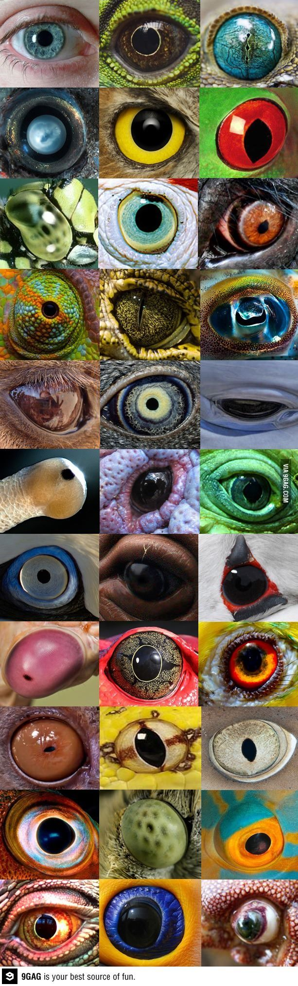 Colorful different eyes of all kinds of animals, lizards, fish, birds, humans and more. I think one is a dolphins. Please also visit www.JustForYouPropheticArt.com for colorful inspirational Prophetic Art and stories. Thank you so much! Blessings!
