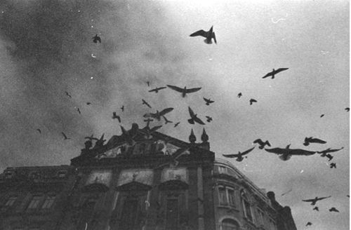 darkness-architecture-birds-black-and-white-Favim.com-636284.jpg (500×328)