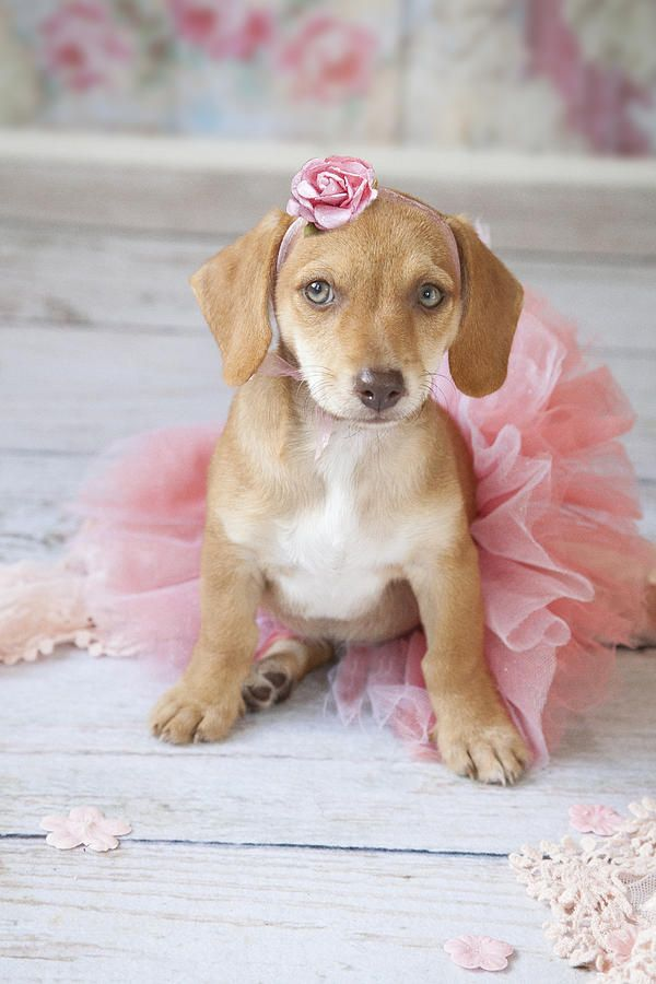 Puppy Ballerina Painting by Lisa Jane