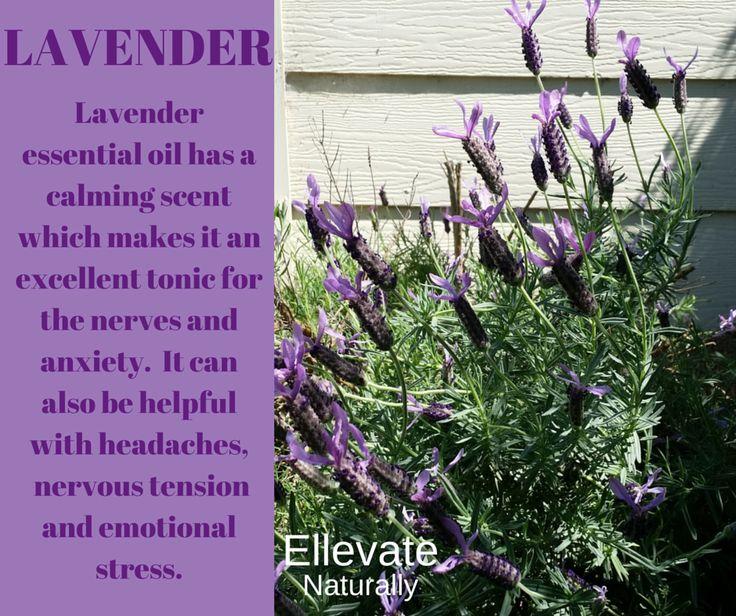 lavender https://www.facebook.com/ellevatenaturally/photos/a.512672888762584.128986.512666322096574/935488989814303/?type=1&theater
