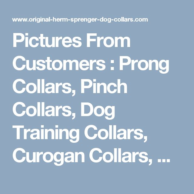 Pictures From Customers : Prong Collars, Pinch Collars, Dog Training Collars, Curogan Collars, Chain Dog Collars, Fur Saver Collars, Choke Dog Collars, Herm Sprenger Collars, Dog Muzzles