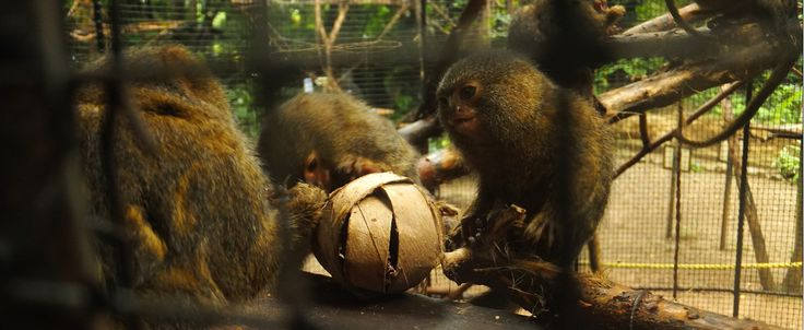 The Titi Leons puzzle over an enrichment activity.