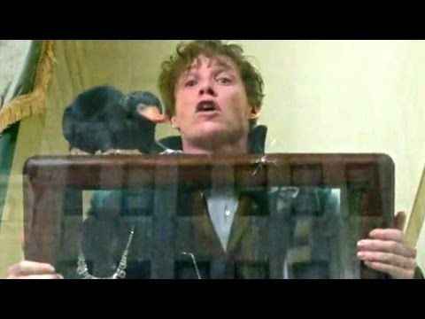 FANTASTIC BEASTS AND WHERE TO FIND THEM Movie Clip - Catching A Niffler (2016) Movie HD - YouTube