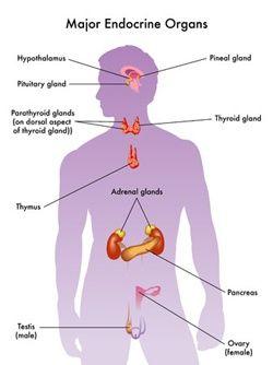Multiple Endocrine Neoplasia: MEN Types 1 and 2
