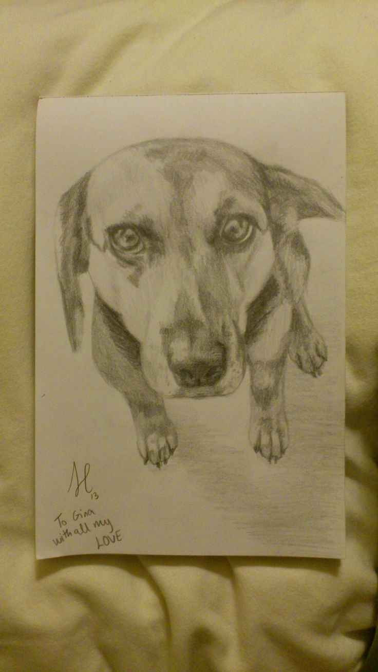 Bella! A special friend's doggy! (pencil)