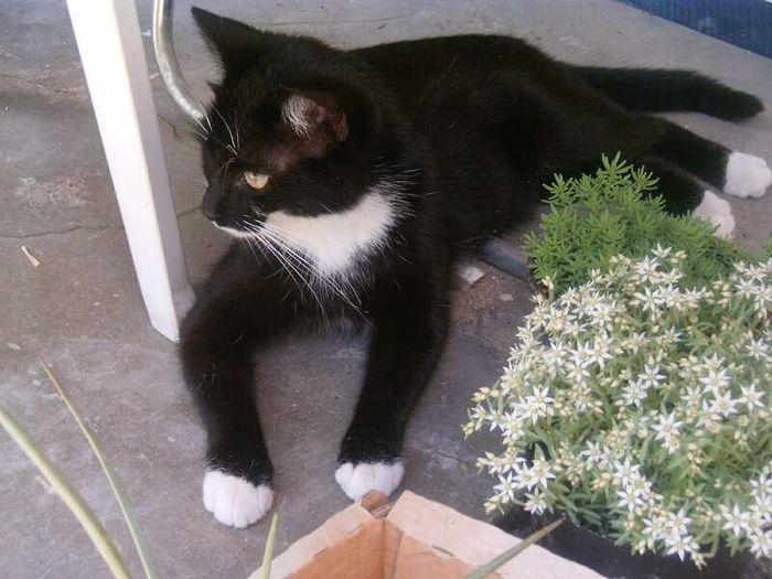 靴下猫の画像:ハムスター速報
