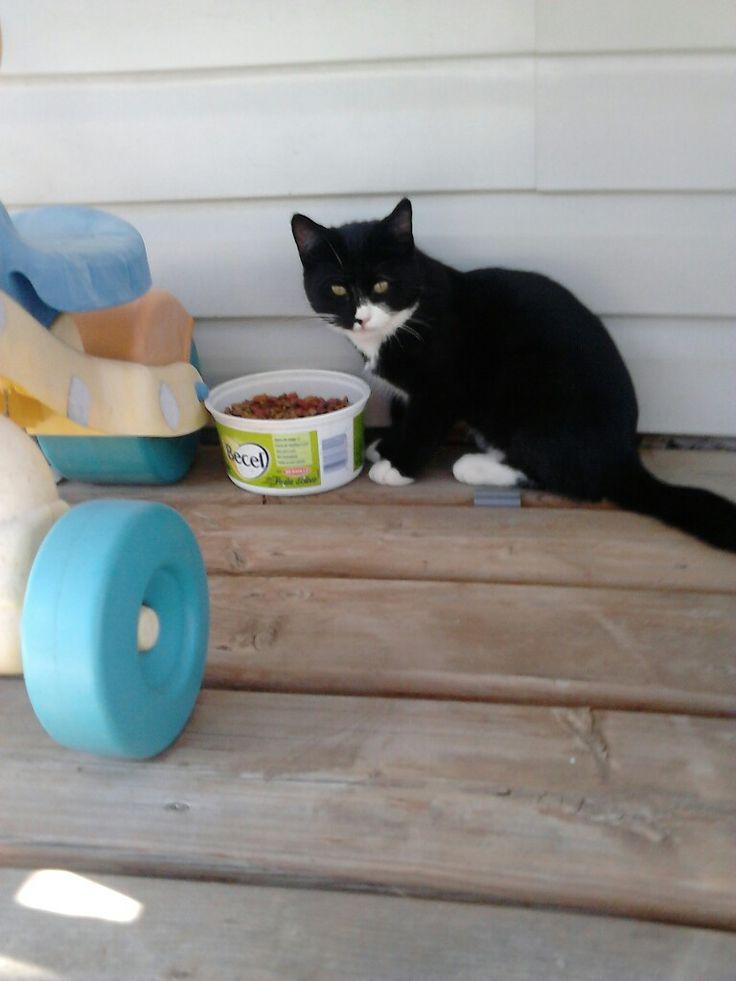 Jazzie my cat 🐱🐱🐈🐈