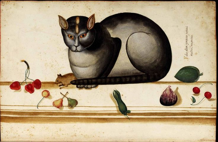 Cat on ledge with mouse and fruit. Ulise Aldrovani Animals, cats. Paintings. Scan of 2 d image in the public domain believed to be free to use without restriction in the US.