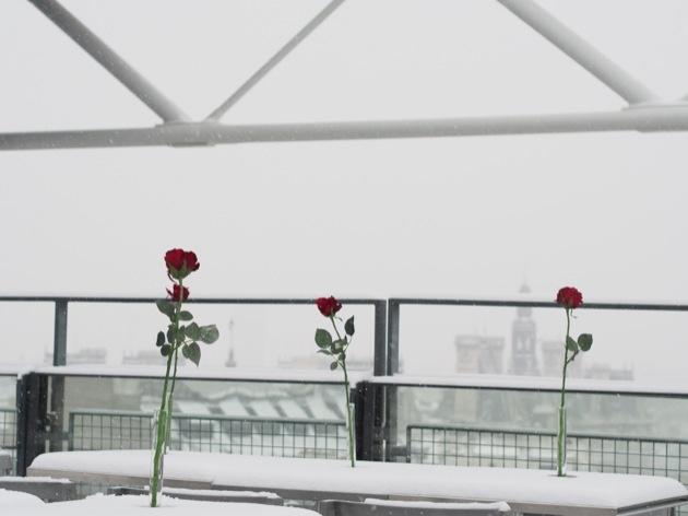 snow & roses in Paris