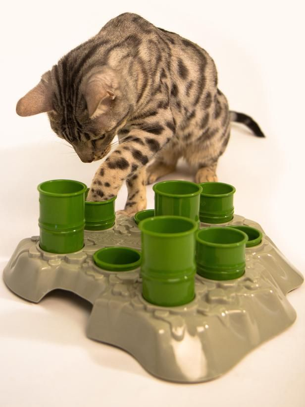 16 Best Images About Cat Food Puzzles And Toys On