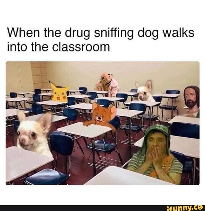 When The Drug Sniffing Dog Walks Into The Classroom Ifunny Really Funny Memes Funny Relatable Memes Funny Black Memes