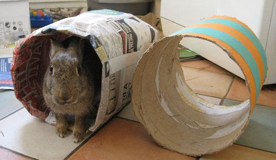 Rabbit Tunnels from Newspaper. A must for every rabbit with time on their hands.