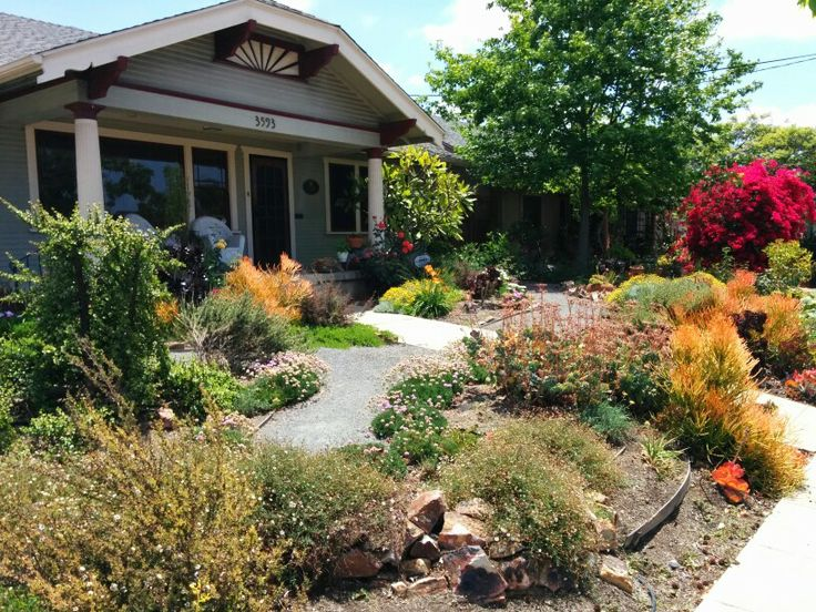 Drought resistant landscaping succulents landscaping for Drought tolerant front garden designs