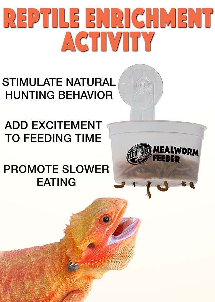 Mealworms slowly fall from holes in the cup while reptiles watch in excitement. Great enrichment activity for a variety of reptiles including bearded dragons, ackie monitors, chinese water dragons, emerald green tree skinks, mountain horned dragons, and more.