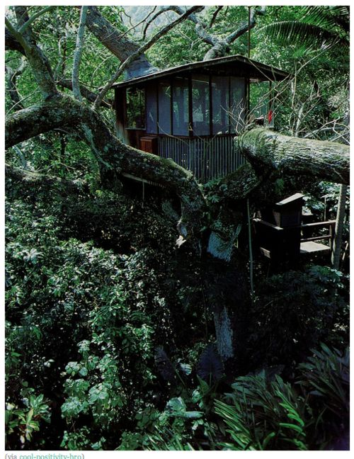 Future Tree Houses 333 best tree houses and alternative housing images on pinterest