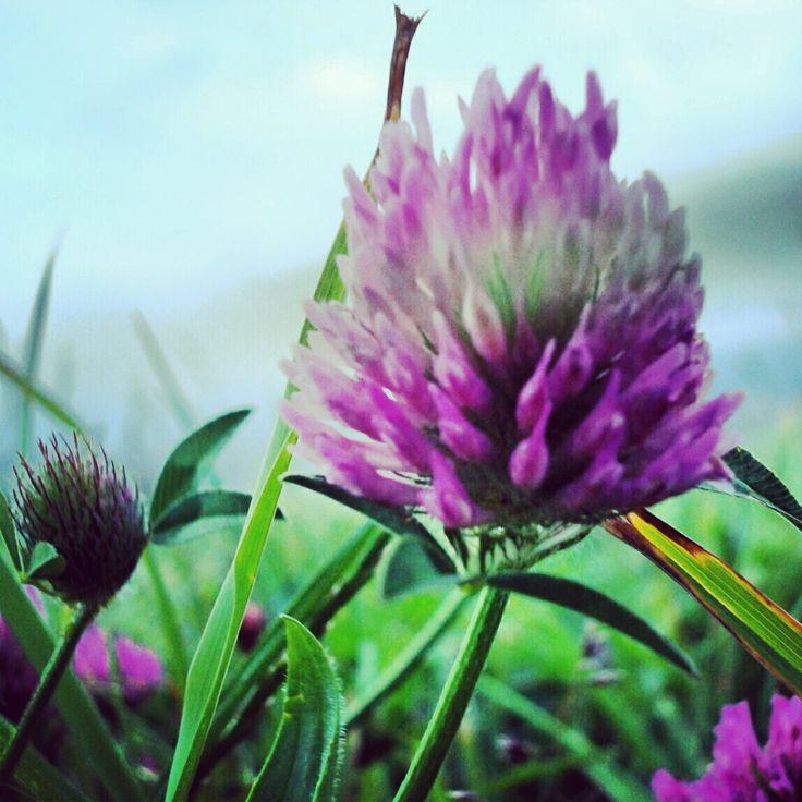 Flower (Bilbo)