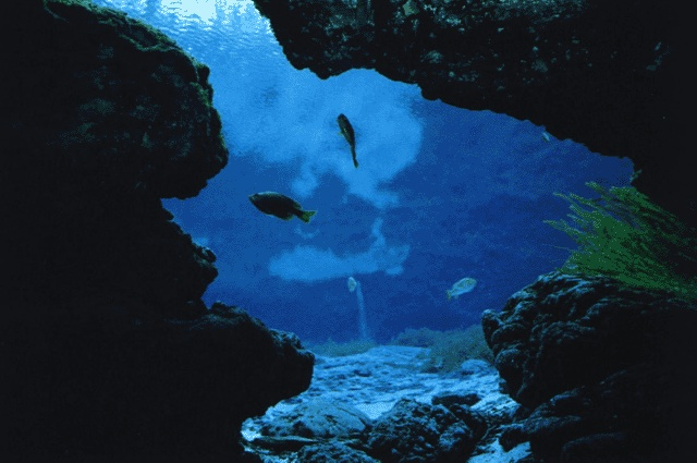 Cavern at Ginnie Springs, FL  Will be here tomorrow.